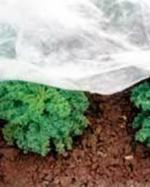 Укрывной материал Спанбонд для защиты растений и посевов СУФ 30 10х2,1 м